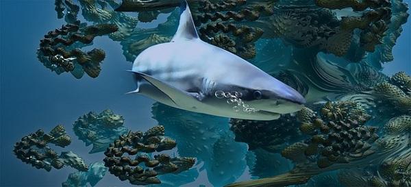 Hai - Unterwasserwelt